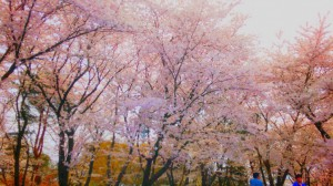 2019-4-14【お花見】-1024x576