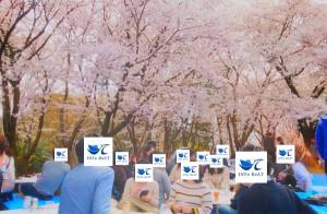 2019-4-14【お花見】2