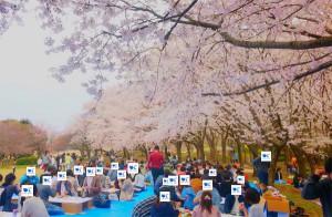 2019-4-14【お花見】3