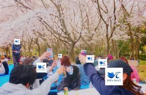 2019-4-14【お花見】5