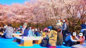 20190413_お花見イベント3