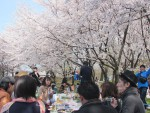 <b>新潟市のお花見❀「男性満員」( ゚▽゚)/</b>