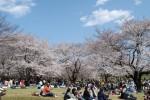 <b>2019年お花見イベント、当日のご案内について(o´▽`o)</b>