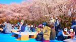<b>お花見イベントは、1人参加・初参加の方が多数です(o´▽`o)</b>