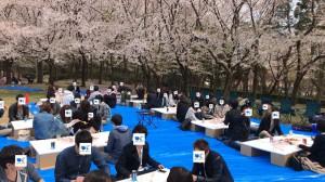 20180414_お花見イベント2
