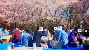 20190413_お花見イベント4